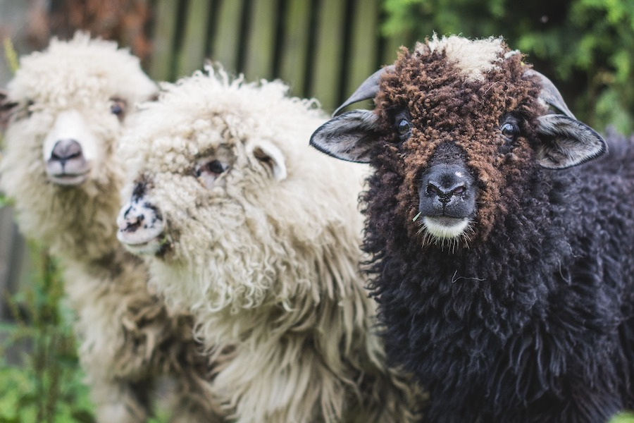 Black Sheep and Scapegoats in Estate Litigation