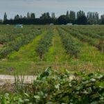 B.C. judge overturns Indo-Canadian farmer's will